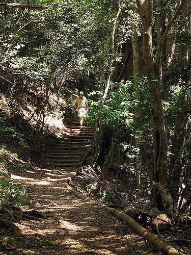 hiking trail at kirstenbosch gardens